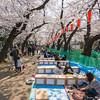 Ueno Morning Picnic