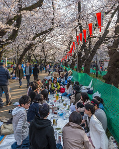 Sakura Memory Making