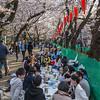 Sakura Memory Making
