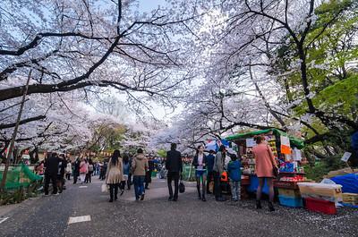 Sakura Vendor