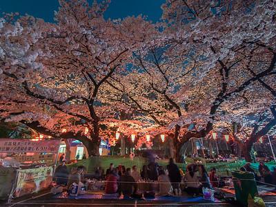 Ueno Nighttime Hanami