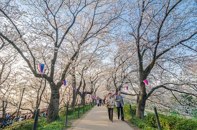 Sakura Strolling
