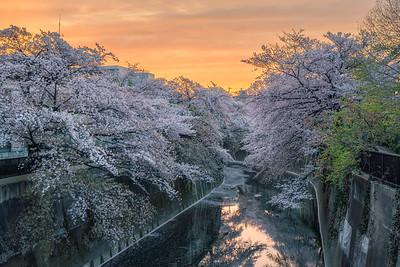 Itabashi Sakura Sunset