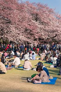 Crowds at Shinjuku Park Sakura