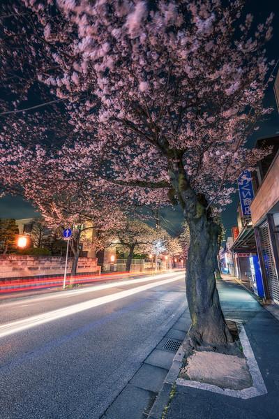 Zoom Sakura