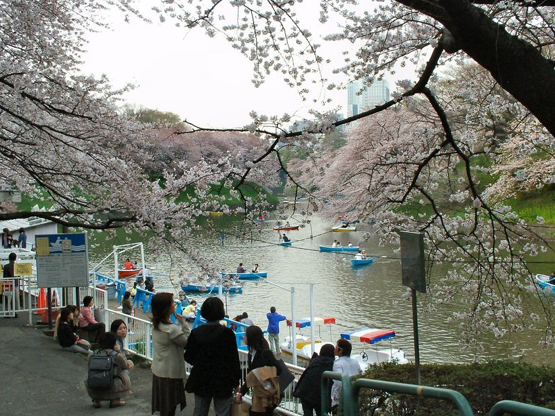 Chidorigafuchi - near the Imperial Palace.  One of the most famous places in Tokyo for viewing cherry blossoms.