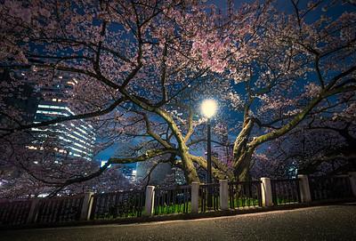 Street Lamp Cherry Blossom
