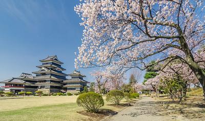 Sakura Path at Matsumoto Casttle