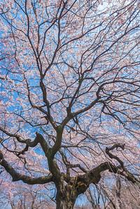 Spring Veins