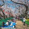 Ueno Picnic Path