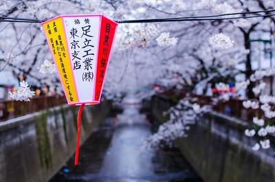 A Lantern in Nakameguro