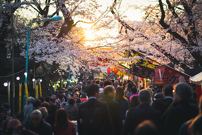Sakura Sunset at Ueno Park