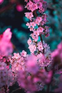 Lantern Lit Blossoms