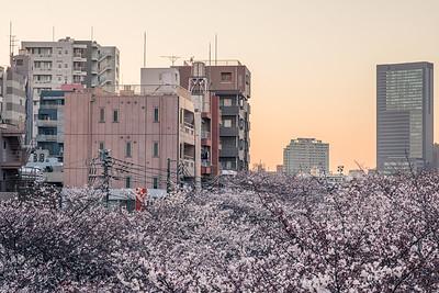 Dusk At Naka Meguro