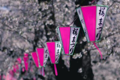Asakusa Lanterns For Sakura Matsuri