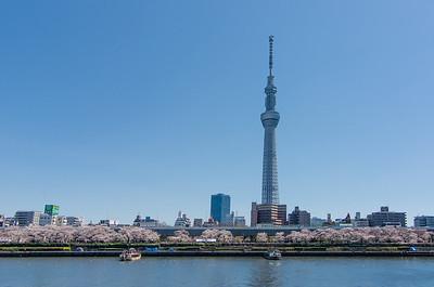Skytree Sakura From Asakusa
