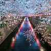 Light Up At Nakameguro Sakura