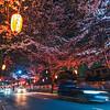 Nighttime Sakura Tunnel