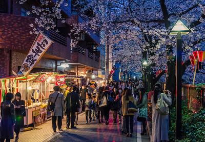 Meguro River Sakura Matsuri