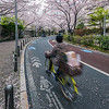 Cycling Through Roppongi Blossoms