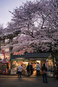 Small Shop At Ueno Park Under Sakura