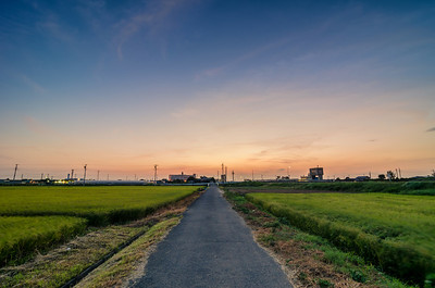Windy Rice Field Sunset