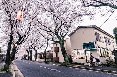 Biking Beneath the Sakura
