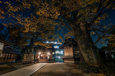 Autumn Evening at Matsudo Jinja