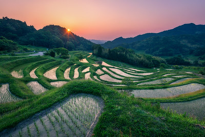 Terraced Rice Field Sunrise