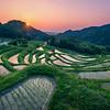 Terraced Rice Field Sunrise
