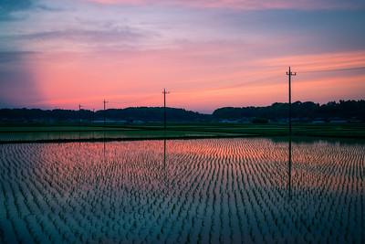 Sunset Over Japanese Rice Fields