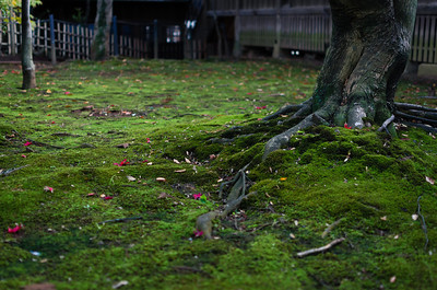 Green Moss in a Japanese Garden