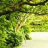 Trail Through Lush Forest