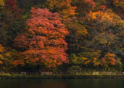 Autumn In Gunma