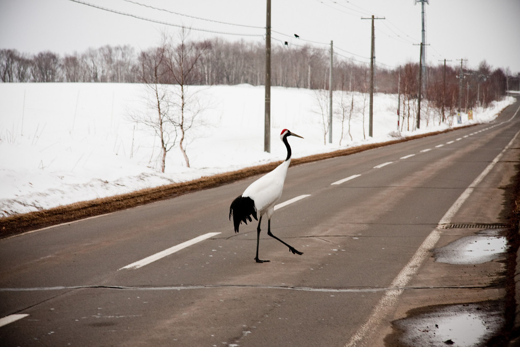Why did the crane cross the road? A better question would be why is there a crane on the road in the first place?