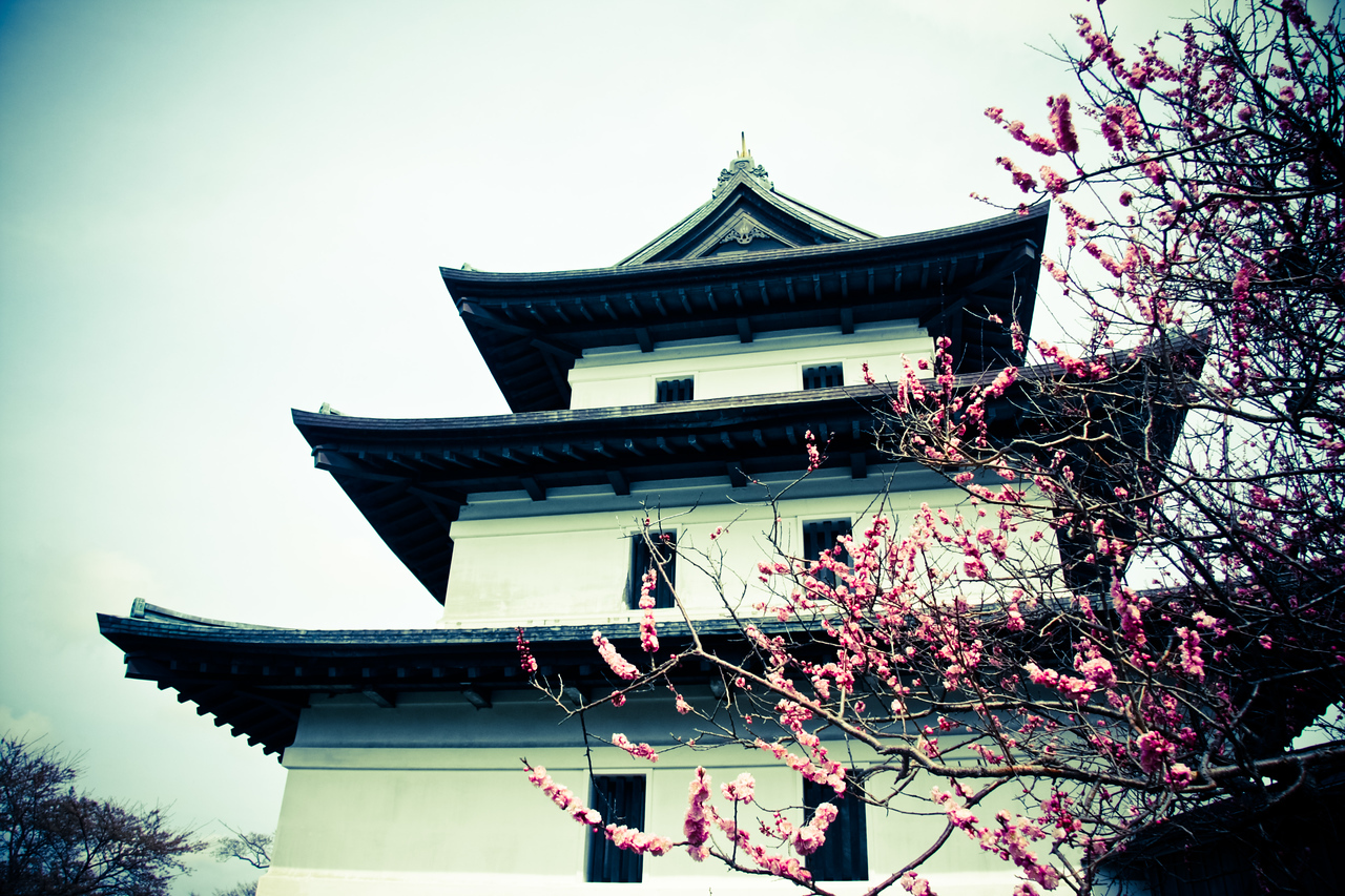 Matsumae (松前) castle. The cherry blossoms were perfect!