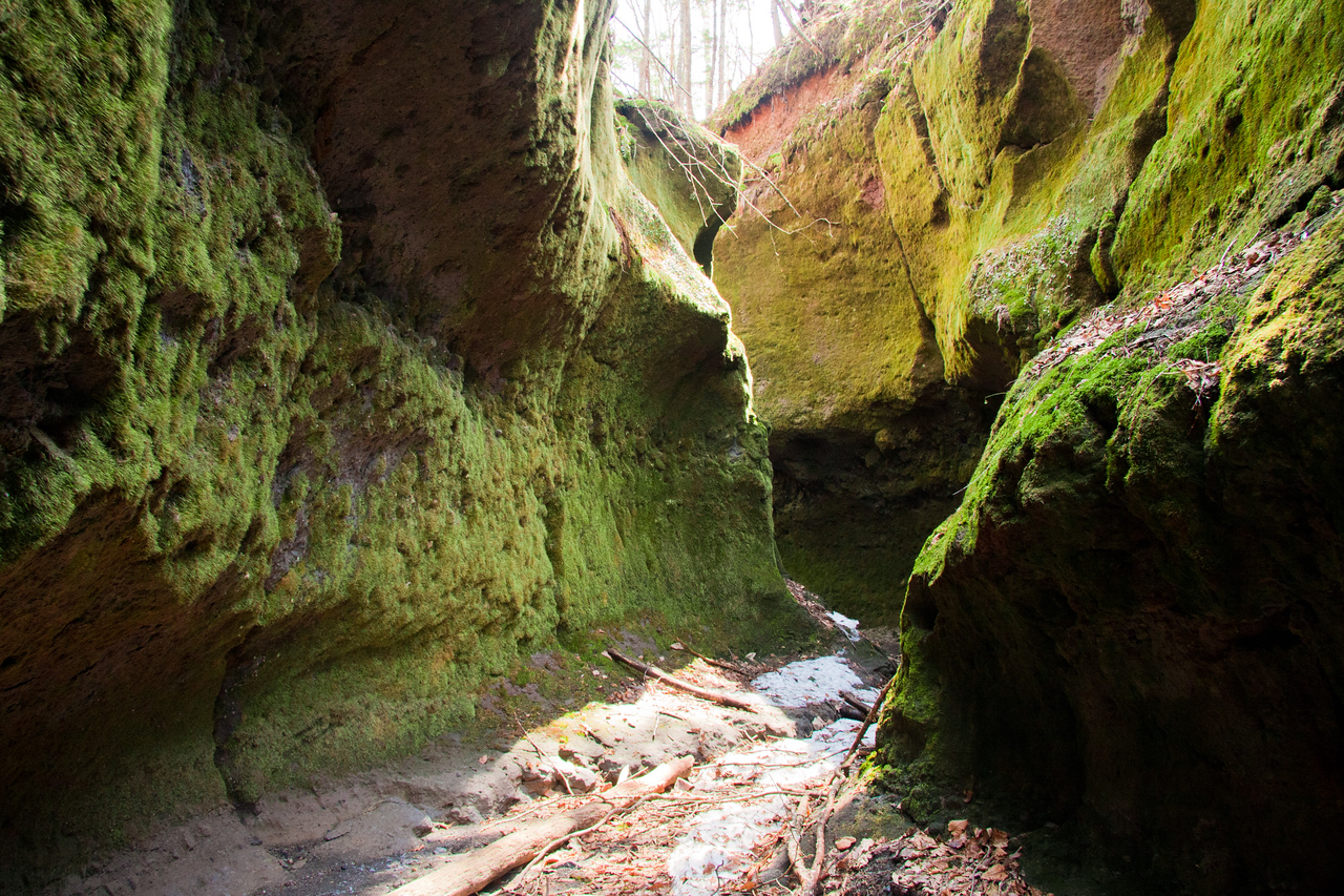 A moss covered gorge