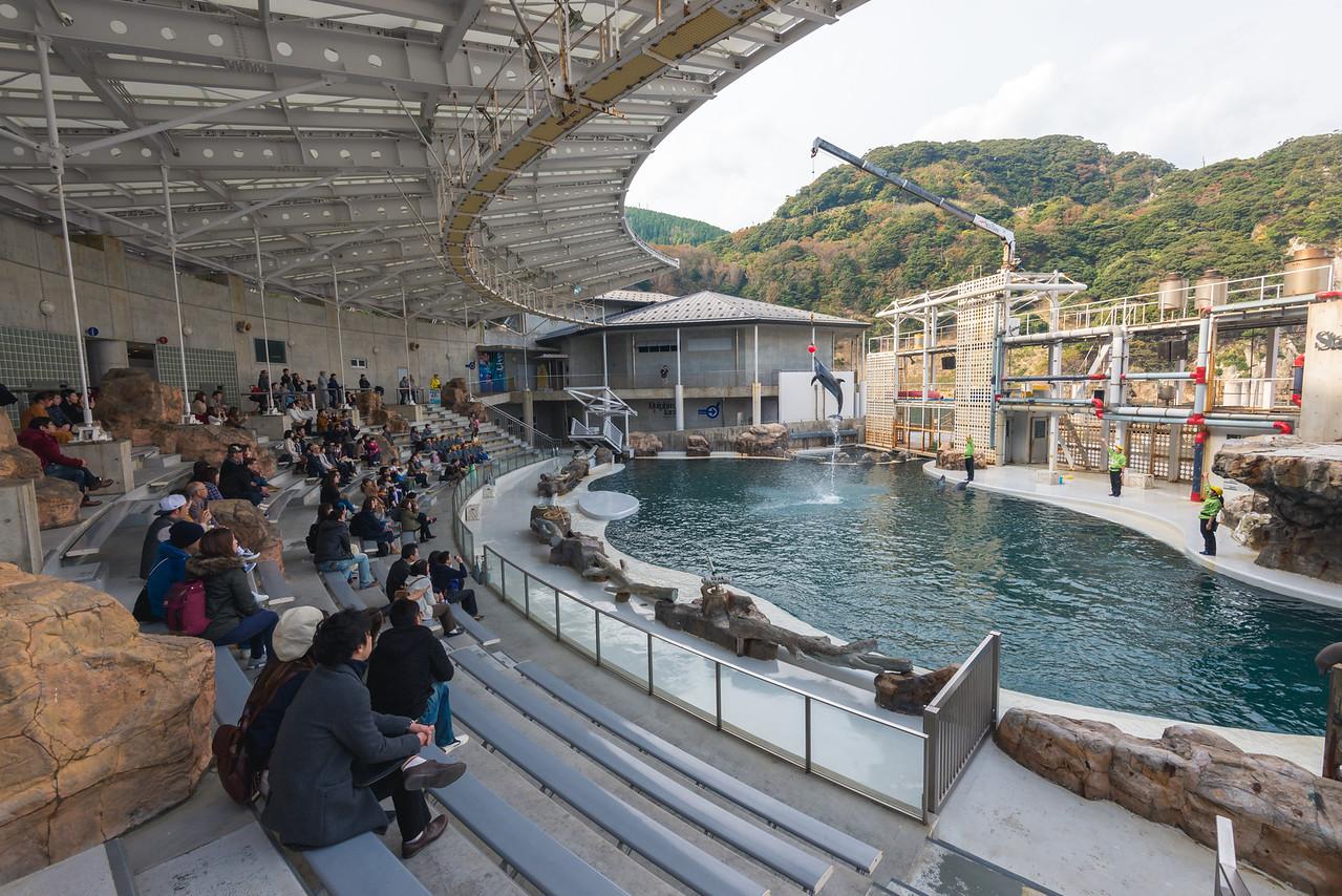 Dolphin Show at Kinosaki Marine World