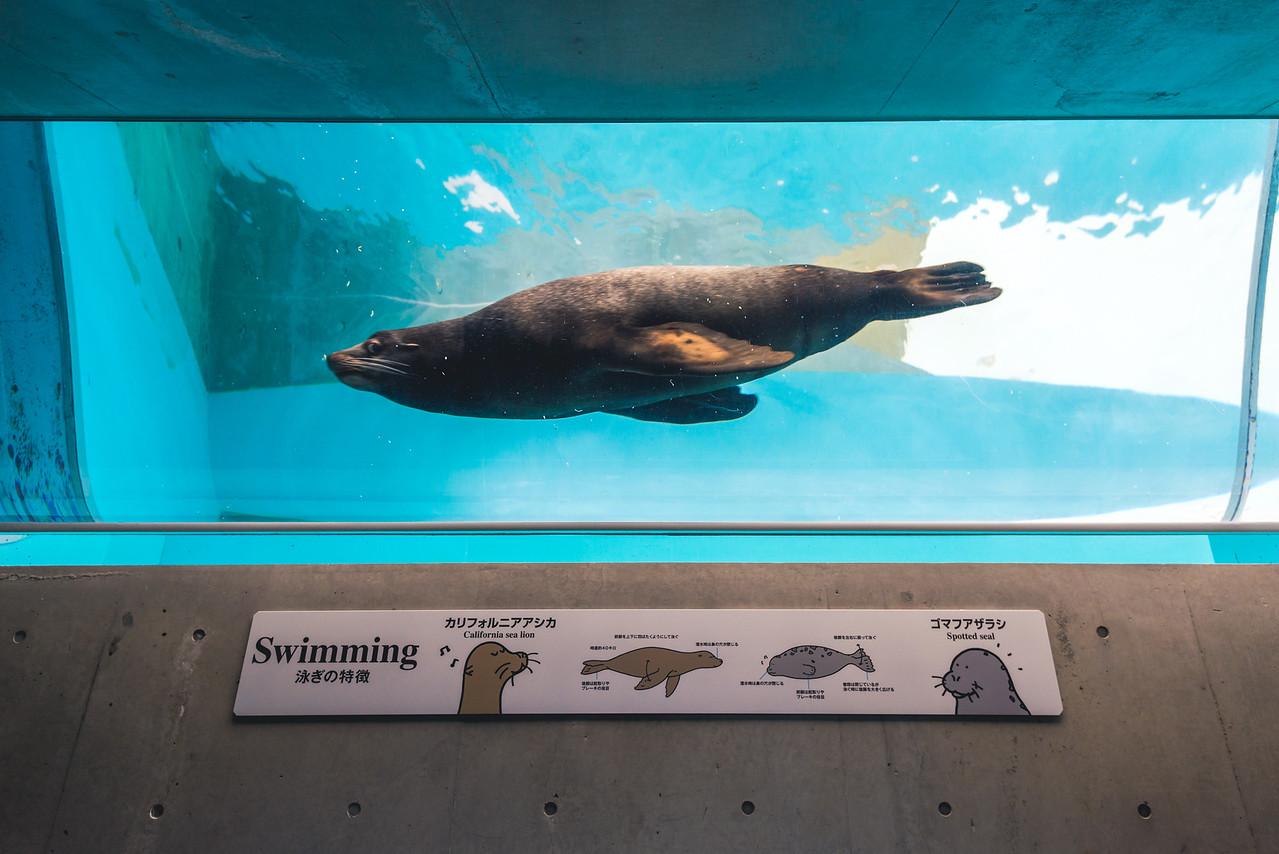 Sea Lion at Kinosaki Marine World