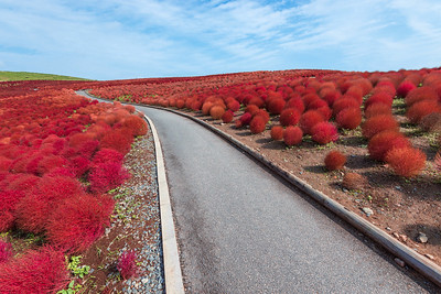 Follow The Red Bush Road