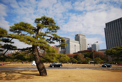 We exit the train near Imperial Palace and take a walk. It's about 40 degrees outside.