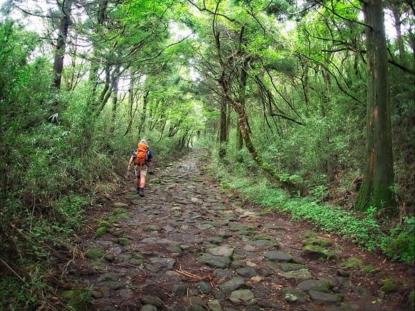 Hakone - Tokaido Rd. © Chiyoko Meacham