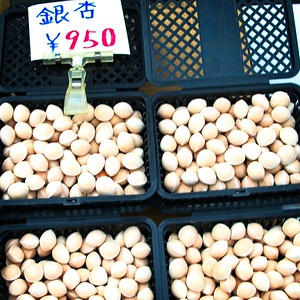 Ginkgo Nuts!
