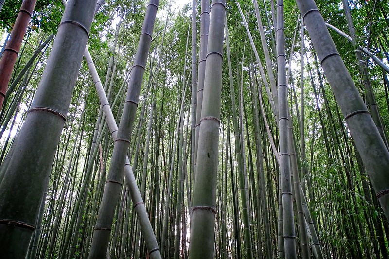The Bamboo Road!