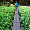 Takiguchi Wasabi Garden