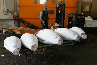 Frozen tuna at the Tsukiji Fish Market in Tokyo