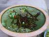 004 Fish Bowl (chi)