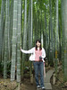 "The Bamboo growing at the Hokokuji Temple has Moso Bamboo <I>Phyllostachys edulis</I>, the largest growing cold hardy species of Bamboo. It can grow up to 80' in height and can have stems of 8 to 10"" in diameter."