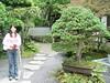 005 Bonsai Pine