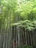 018 Moso Bamboo